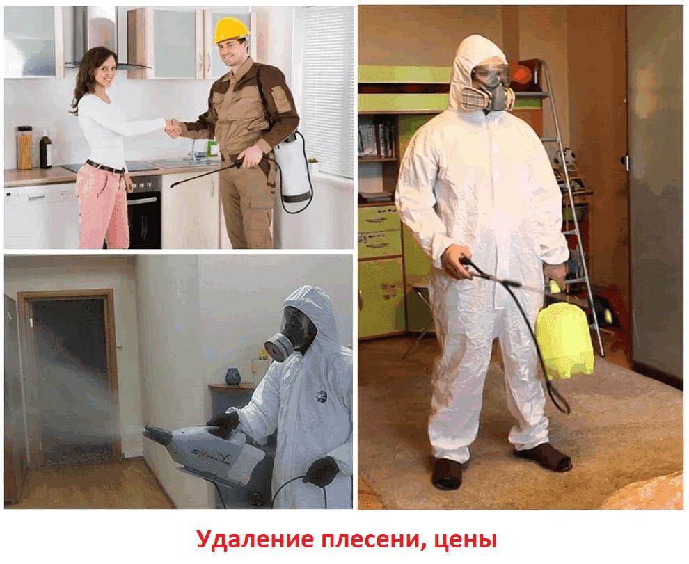 Избавиться от плесени цена в Москве