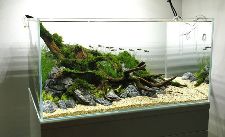 Aquascaping hobby