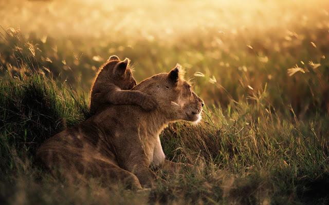 Safari nel mondo