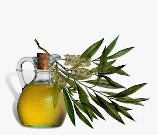 Ini minyak pohon teh australia