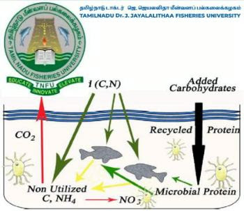 Biofloc technology expected to boost aquaculture in Tamil Nadu, (India)
