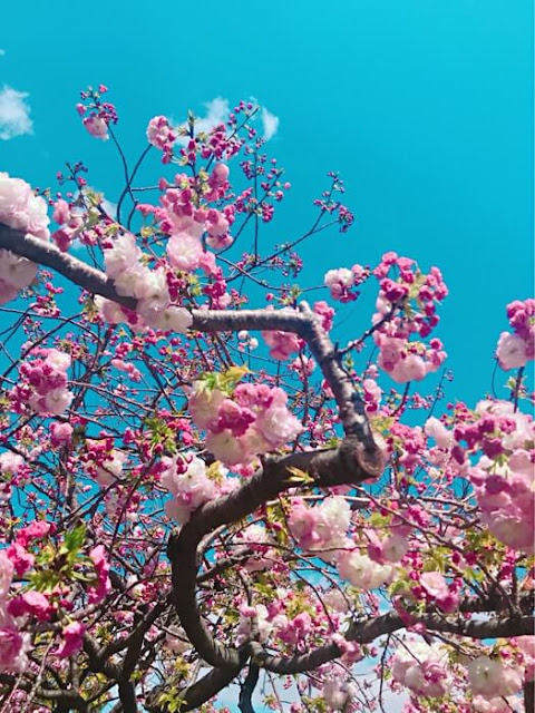 ギリギリ花見