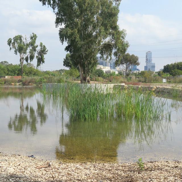 השתקפויות באגם של מרכז צפרות 'ראש ציפור' פארק הירקון