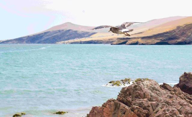 mar calmo com rochas na costa e passaro voando