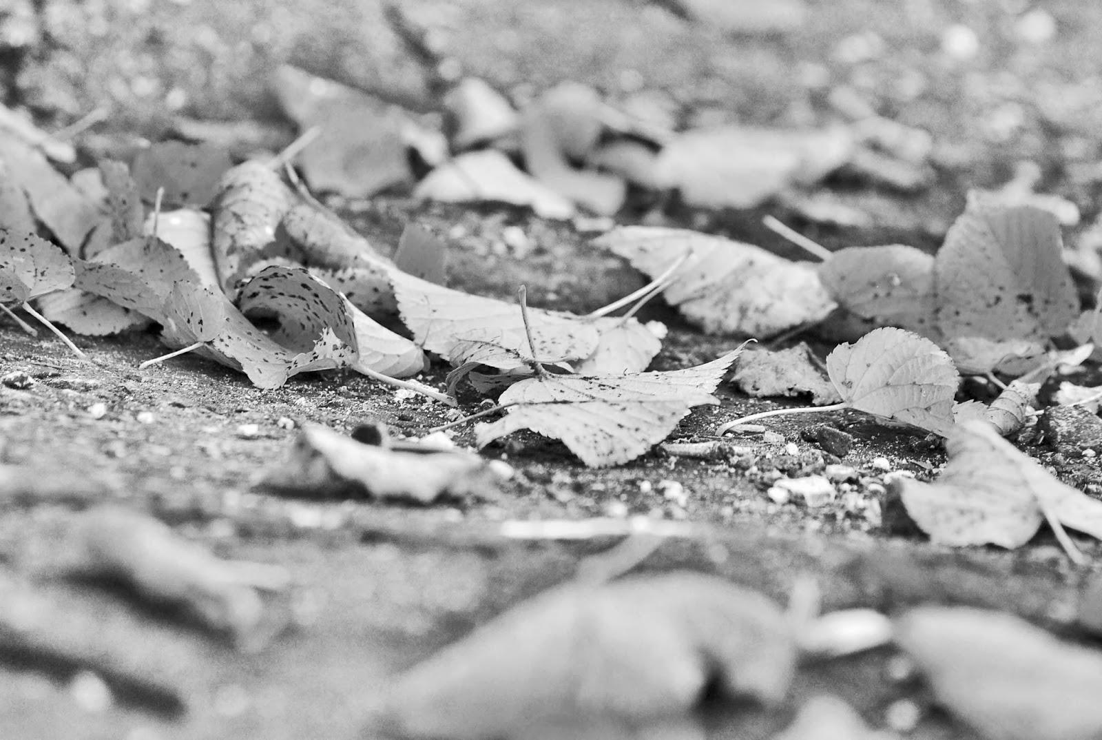 park liście