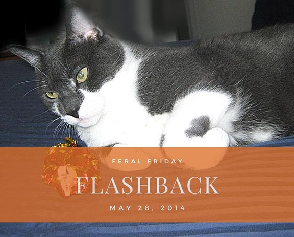 Crinkly Flashback Feral Friday