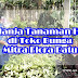Membeli Tanaman Hias di Toko Bunga Mitra Flora Nusantara Batu