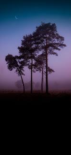 خلفية ايفون شجرة الغابة وقت الغروب