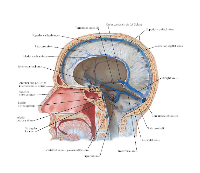 Dural Venous Sinuses: Sagittal Section Anatomy