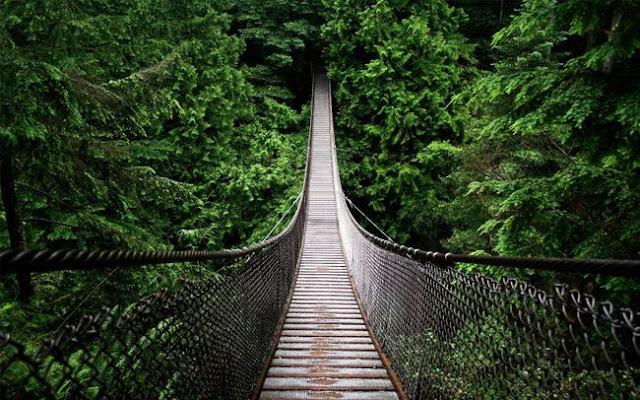 كيف نستفيد من الغابات؟؟