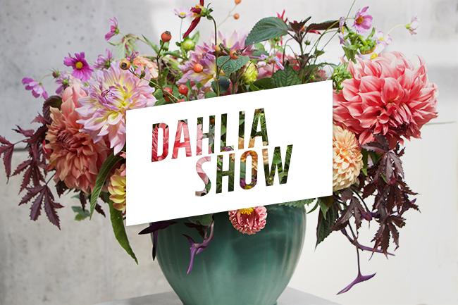 An Extraordinary Dahlia Show  Kicks off a New Dahlia Society