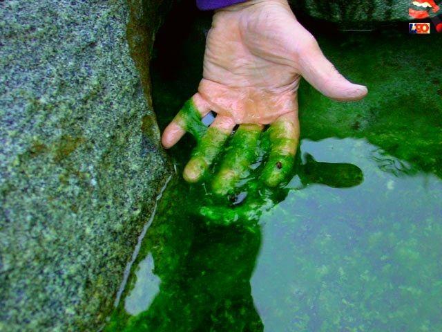 Cara Agar Lumut tidak Tumbuh di Kolam