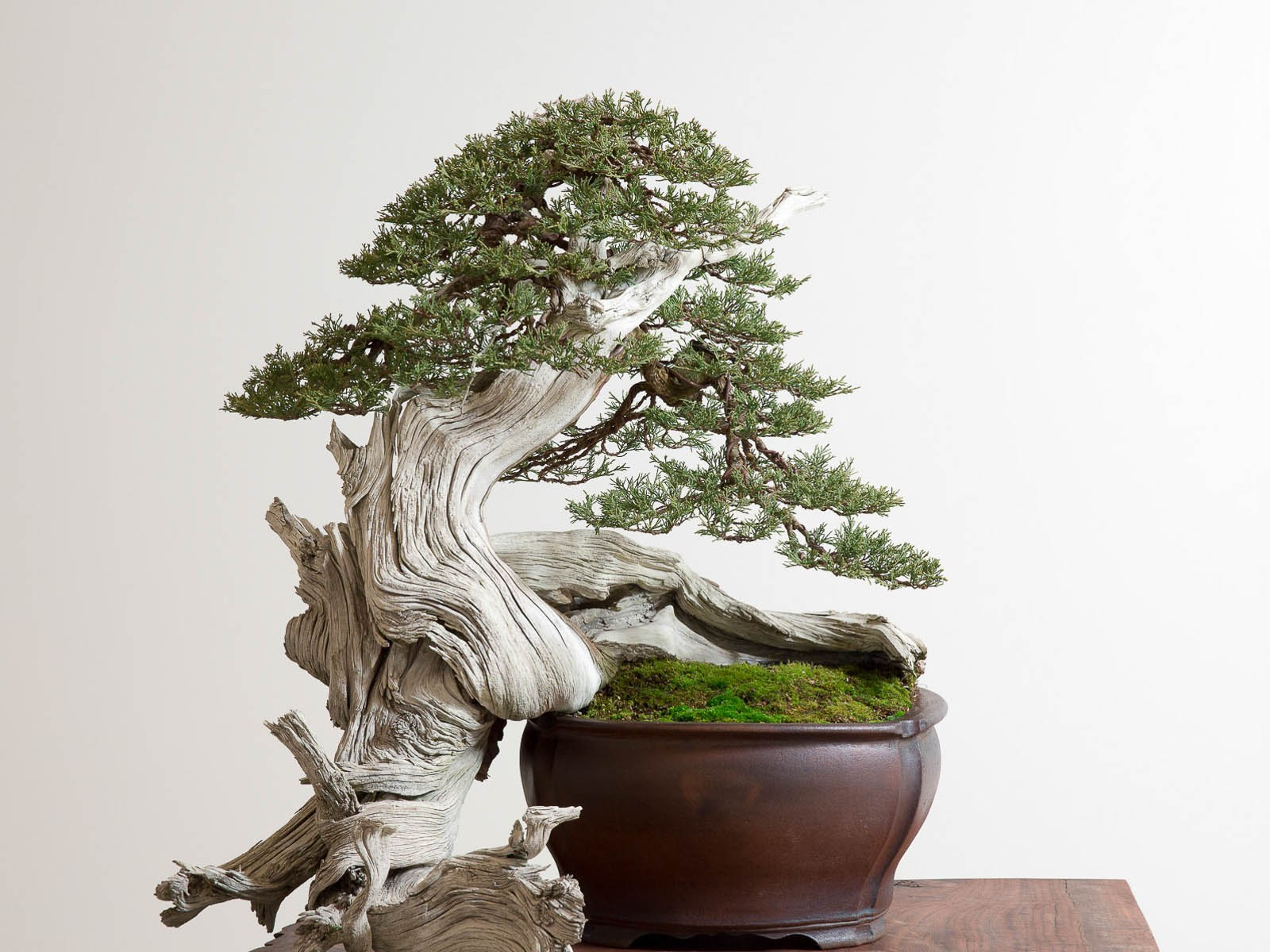 March 2016 Dynamic Bonsai