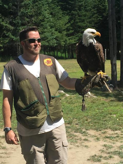 Parc Omega faune vacances oiseaux de proie