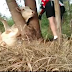 Two cyclists help a cow that got her head stuck in a tree