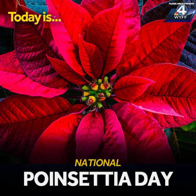 National Poinsettia Day Wishes Unique Image