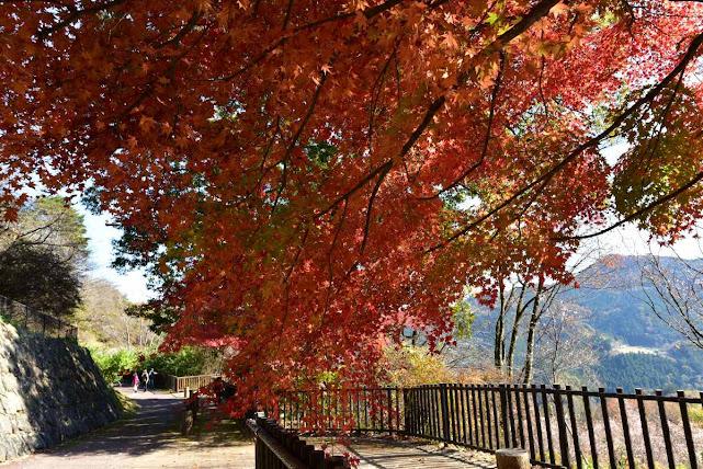 城峰公園の紅葉3