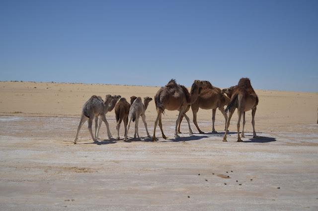 porta de entrada para o deserto do Sahara da Tunísia
