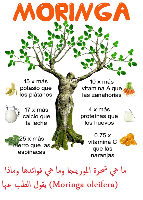 اضرار شجرة المورينجا شجرة المورينجا,, بذور شجرة المورينجا, كيفية زراعة شجرة المورينجا,, طول شجرة المورينجا,, فوائد شجرة المورينجا للجنس,, ما هي المورينجا بالمصري,, طريقة استخدام شجرة المورينجا,, فوائد المورينجا للكبد, منقوع المورينجا, فوائد حبوب المورينجا, فوائد المورينجا للاعصاب, فوائد المورينجا للامساك, شرب المورينجا على الريق, فوائد المورينجا للشعر, فوائد المورينجا للحمل, moringa oleifera, moringa tree, moringa oleifera pdf, moringa leaves benefits, moringa side effects, moringa peregrina, moringa seeds, moringa nutrition facts,