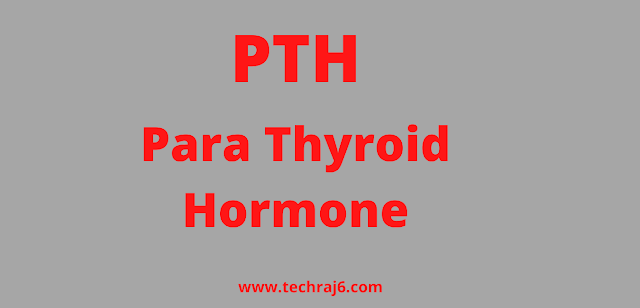 PTH full form, What is the full form of PTH