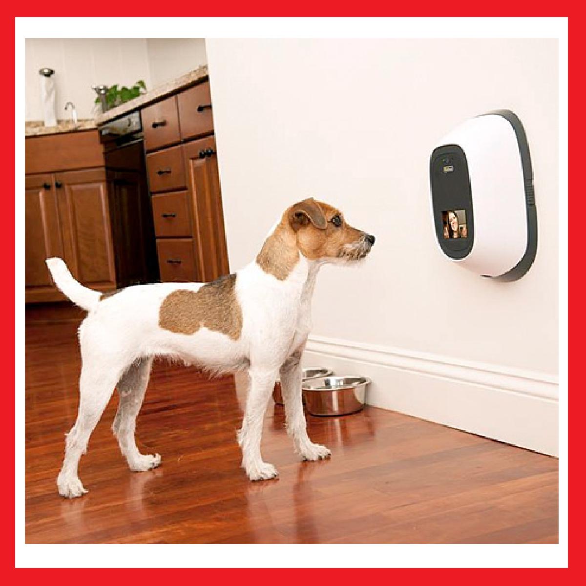 Surveillez votre chien grâce à PetChatz.