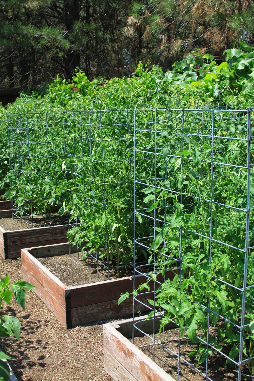 salsa garden