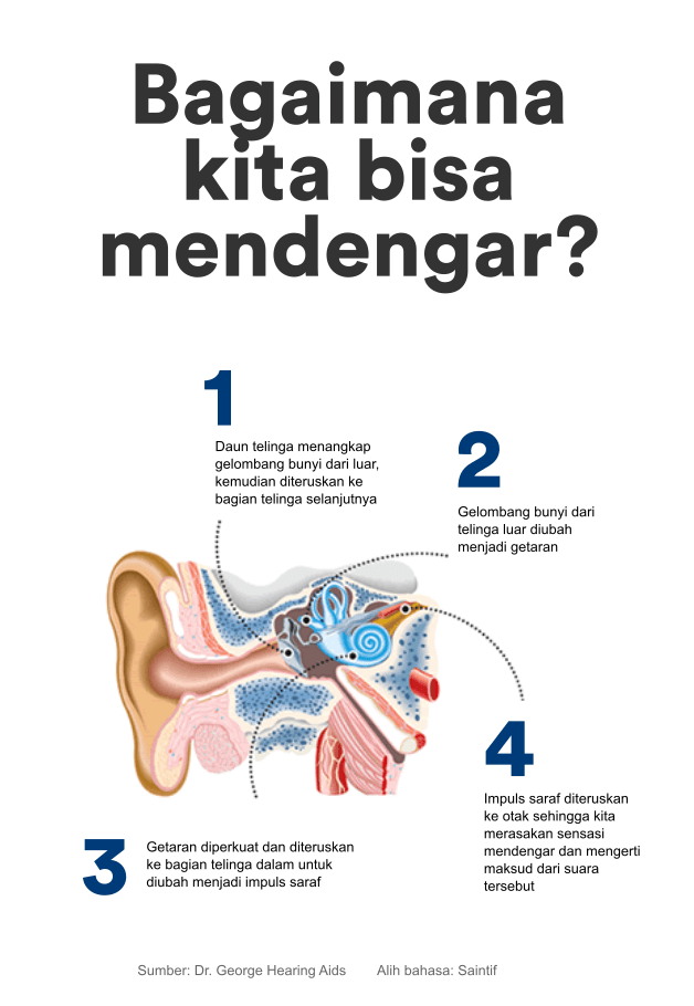 Telinga Dan Kegunaannya