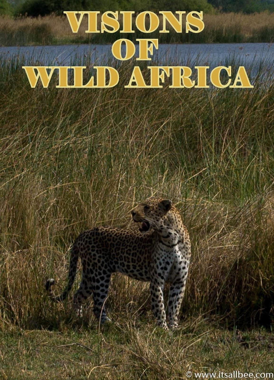 Safari In Botswana Okavanago Delta - Moremi PARK