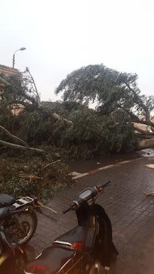 شاهد ما خلفته الرياح العاصفية بشوارع مراكش