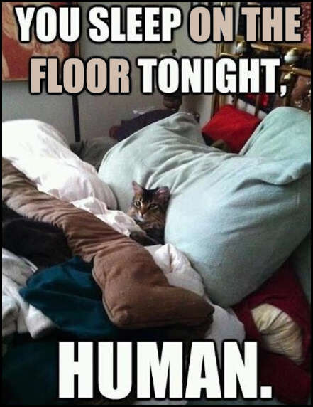 You sleep on the floor tonight, HUMAN