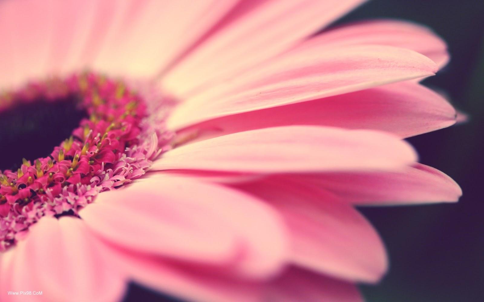 Beautiful flowers hd desktop wallpapers in 1080p super - Pink flower wallpaper background ...