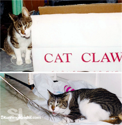 Cat Claws™ subscription box review & giveaway