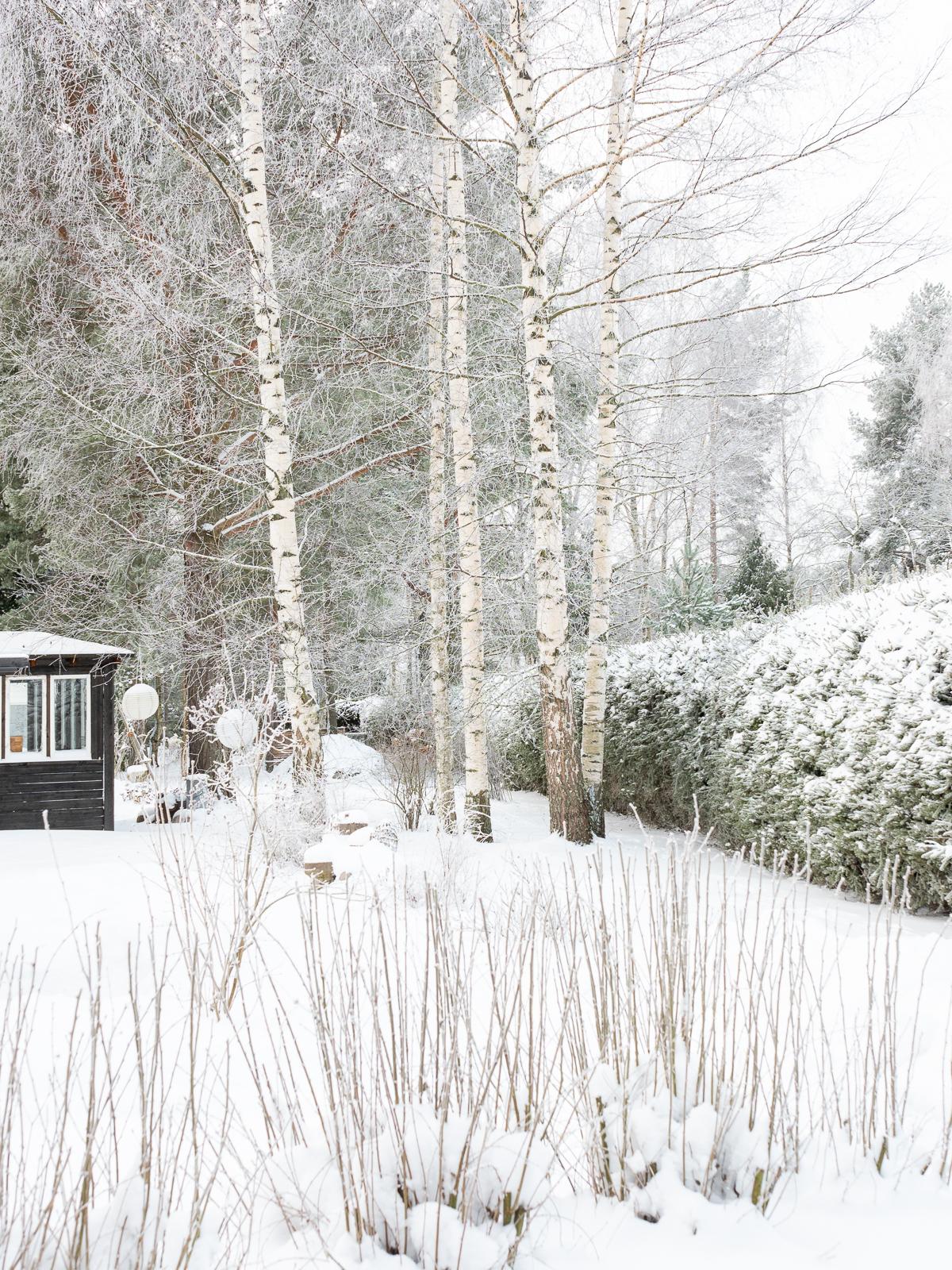 puutarha talvella