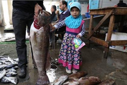 Subhanallah.. Berkah Dari Allah, Ikan Dari Laut Gaza Sebesar Ini