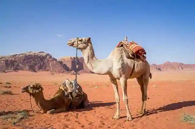 Amazing Facts About Camel in Hindi