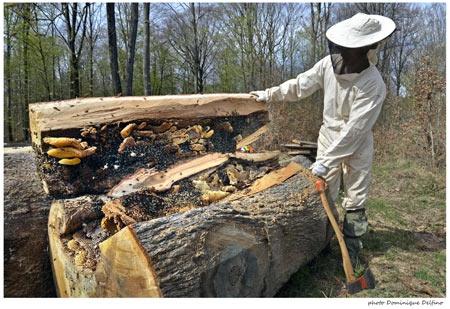 les ruches en apiculture naturelle et sauvage d couverte sur les abeilles les fourmis et les. Black Bedroom Furniture Sets. Home Design Ideas