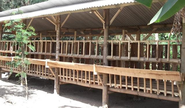Tiang Kandang Kambing dari Bambu Sederhana