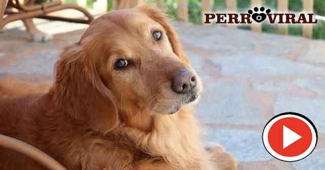 Perro logró engañar a su humano y quedó grabado en este vídeo