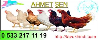 Tekirdağ Süleymanpaşa tavuk-yarka-civciv-hindi