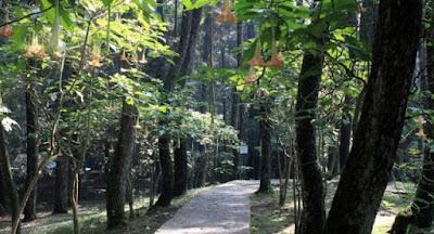 Contoh Ekosistem Alami dan Contoh Ekosistem BuatanContoh Ekosistem Alami dan Contoh Ekosistem Buatan