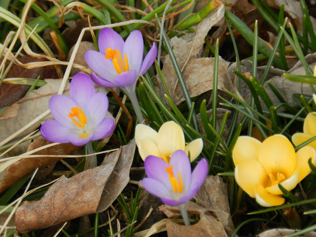 GBBD: Signs of Spring