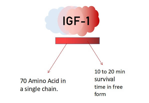 IGF-1 supplements   Benefits and Side Effects - Fitnessfeasts