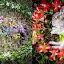 Artista 'macabra' faz memoriais ao redor de cadáveres de animais que encontra em florestas