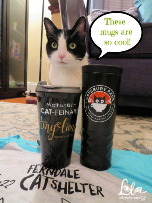 cat cafes, swag, giveaway