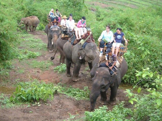 Andar de elefantes na Tailândia