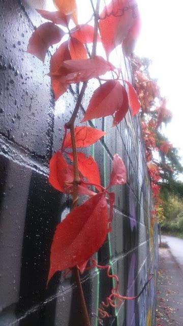 Mauer Herbst Streetart Laub Dortmund Hoffnung