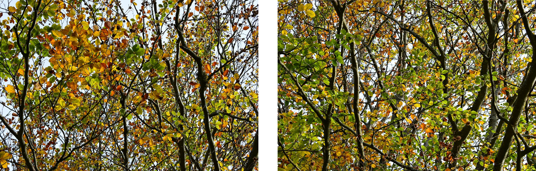 colores del otoño en los arboles