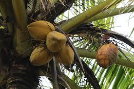Benefits of Coconut Water in Summer