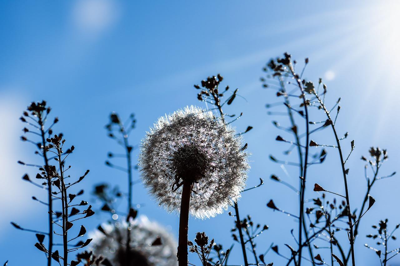 Wildflower Meadow seed