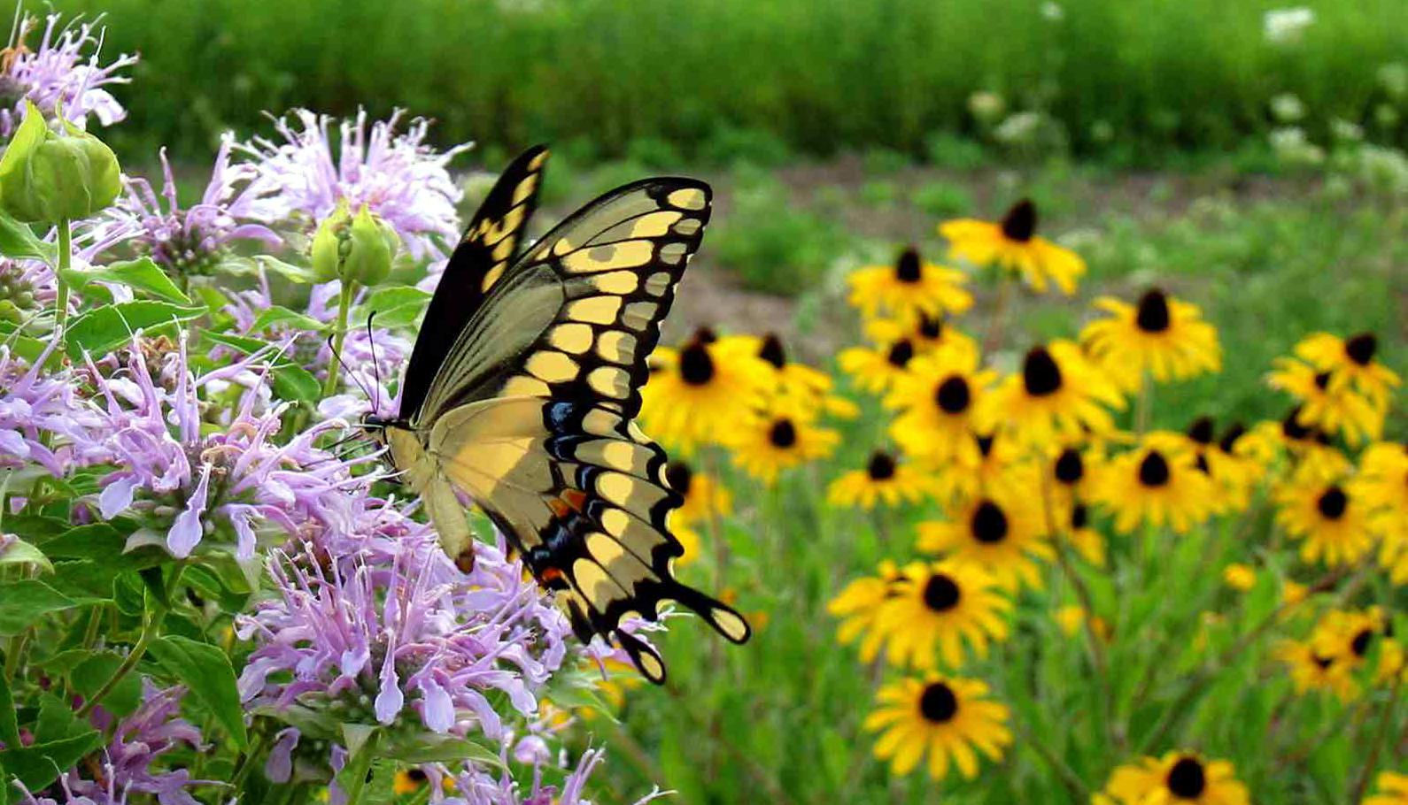 Aejeco curso de jardiner a ecol gica y dise o de bosques for Jardineria ecologica